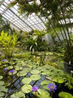 Botanischer Garten, Jena, Park, Goethe