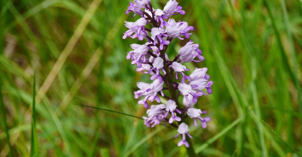 Wandern in Jena, Orchideenwanderung, Geführte Wanderung