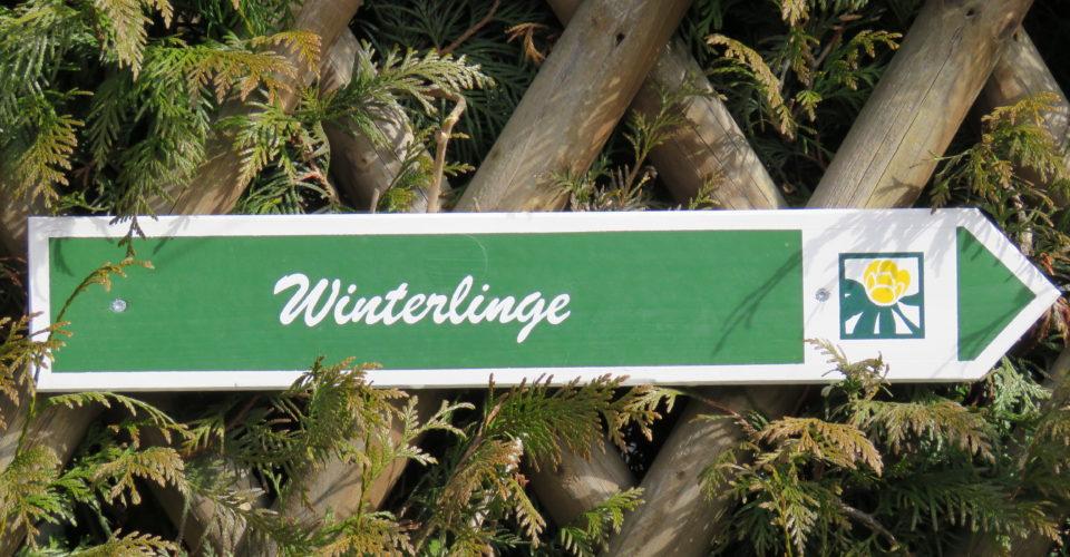 Rundwanderweg Winterlinge, Wandern in Jena, Wandern Frühjahr