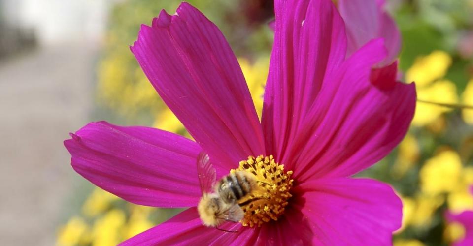 Biene auf Blume_Martin_Heinrich_web